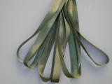 Gloriana 7mm Silk Ribbon117 Elizabethan Green