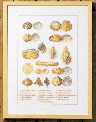 Permin Kits906400 ~ Seashells ~ 14 count Aida