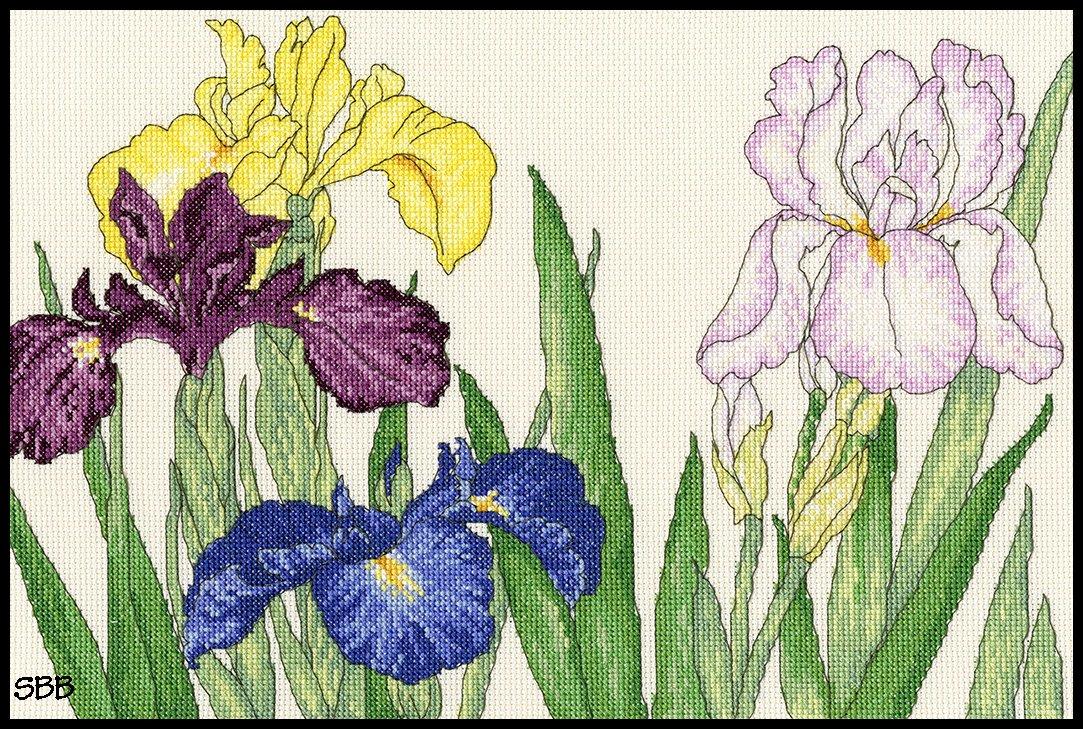 Bothy Threads Kits BTXBD14 Blooms Collection Iris Blooms ~ Bothy Designs ~ 14ct White Aida
