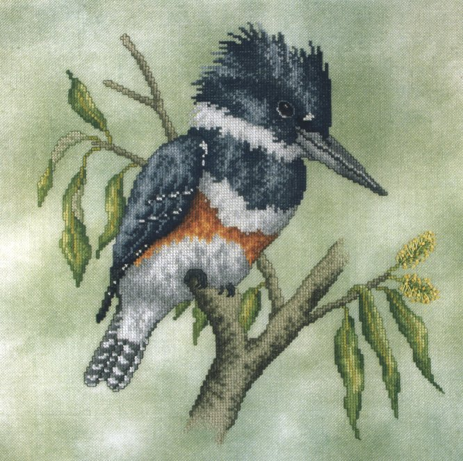 Crossed Wing CollectionBelted Kingfisher