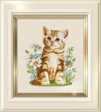 Ellen Maurer-Stroh Summer Kitten