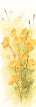 Heritage Crafts Kits HCK0876 John Clayton ~ Flower Panels ~ Buttercups