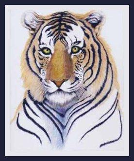 TechScribes Tiger Portrait