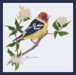 TechScribes Western Tanager