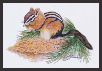 TechScribes Yellow Pine Chipmunk